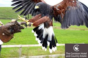 The Coniston Hotel Half Day Falconry Experience Image