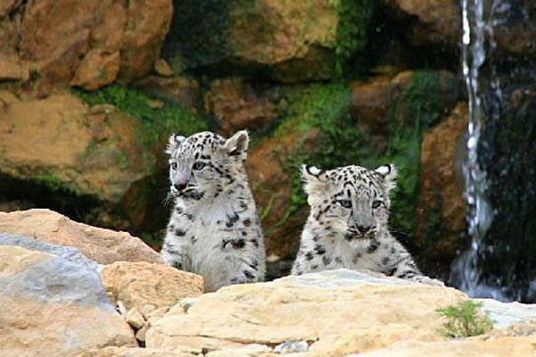 Twycross Zoo Break Image